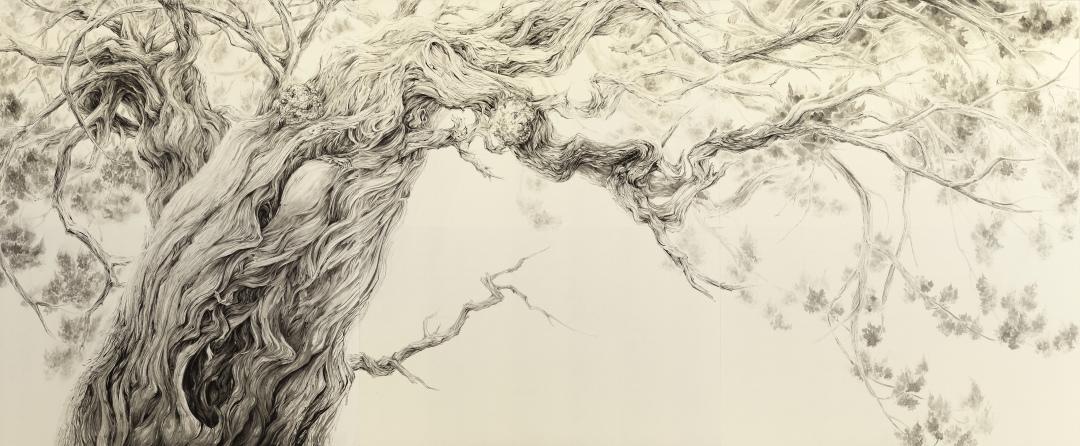 鎌倉の古刹に生えているビャクシン(イブキ)の大木に着想を得て描かれました。